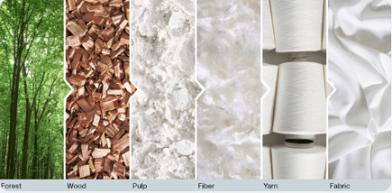 wood-to-fiber.jpg